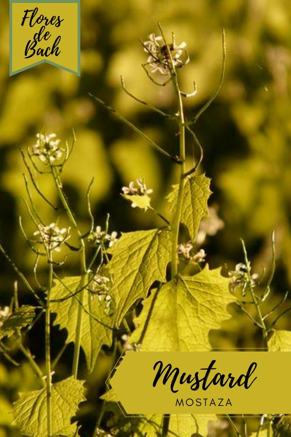 Flores de Bach Mostaza